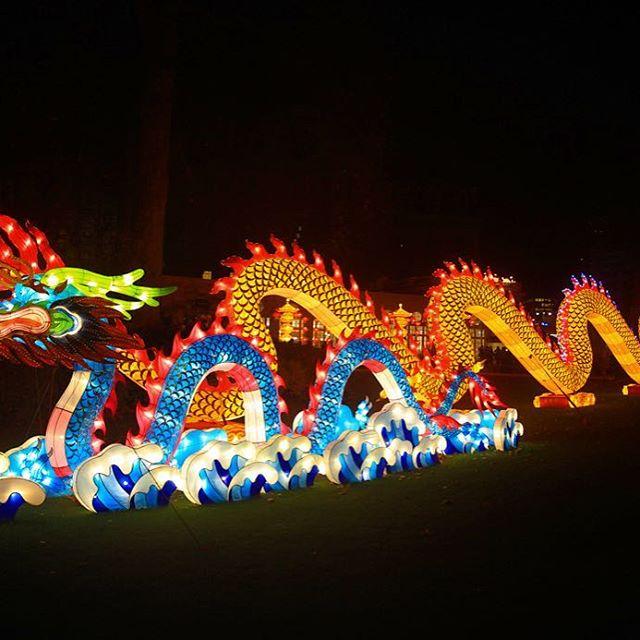 China Light in de Antwerpen Zoo #chinalights #chinalight #antwerpen #antwerpenzoo #visitantwerp #winterinantwerpen